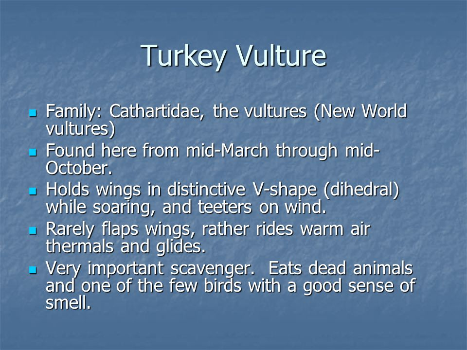 Family: Cathartidae, the vultures (New World vultures) Family: Cathartidae, the vultures (New World vultures) Found here from mid-March through mid- October.