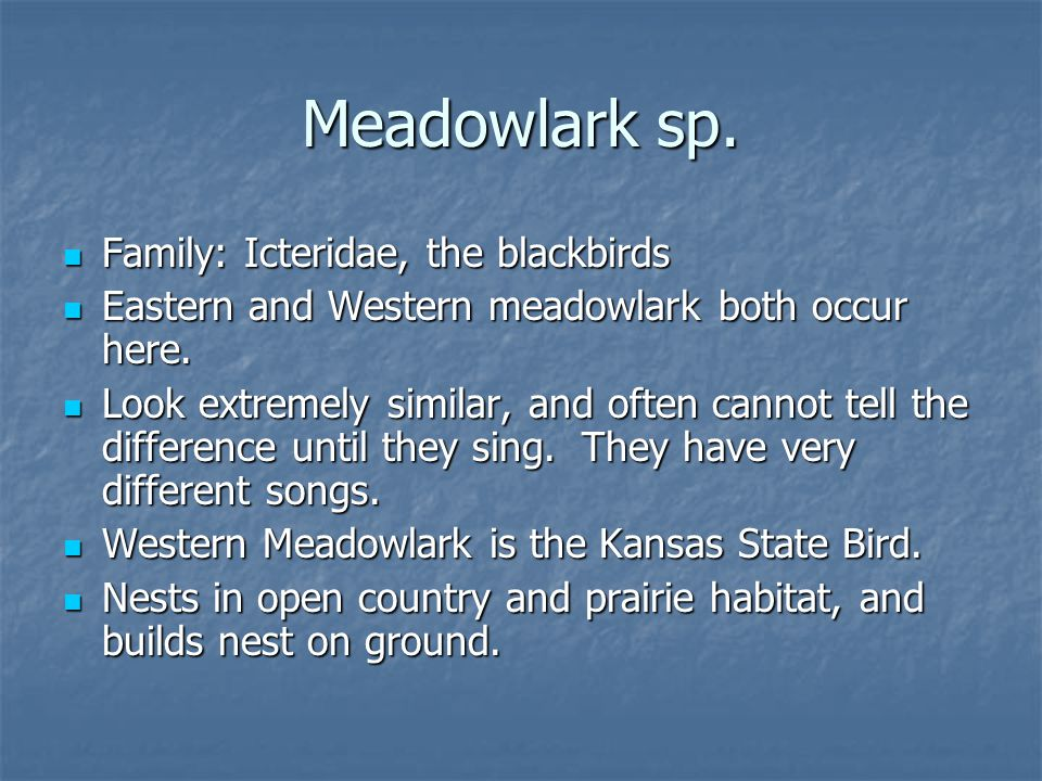Family: Icteridae, the blackbirds Family: Icteridae, the blackbirds Eastern and Western meadowlark both occur here.