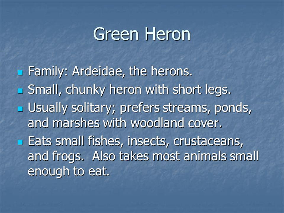 Family: Ardeidae, the herons. Family: Ardeidae, the herons.