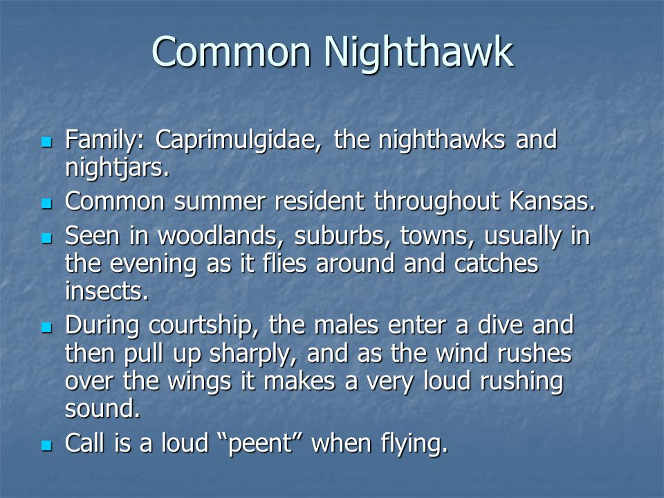 Family: Caprimulgidae, the nighthawks and nightjars.