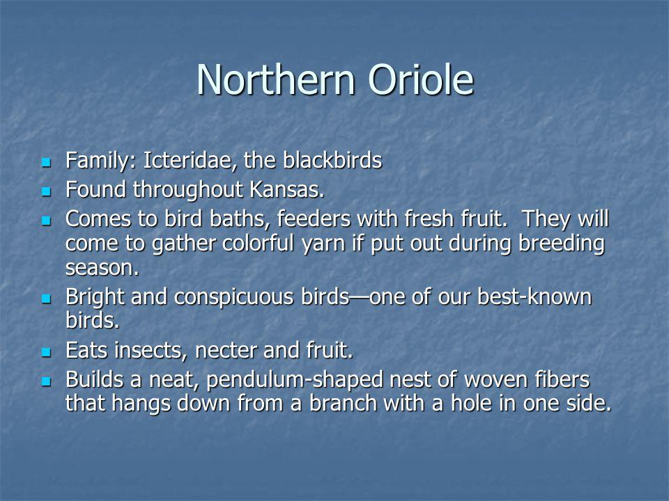 Family: Icteridae, the blackbirds Family: Icteridae, the blackbirds Found throughout Kansas.