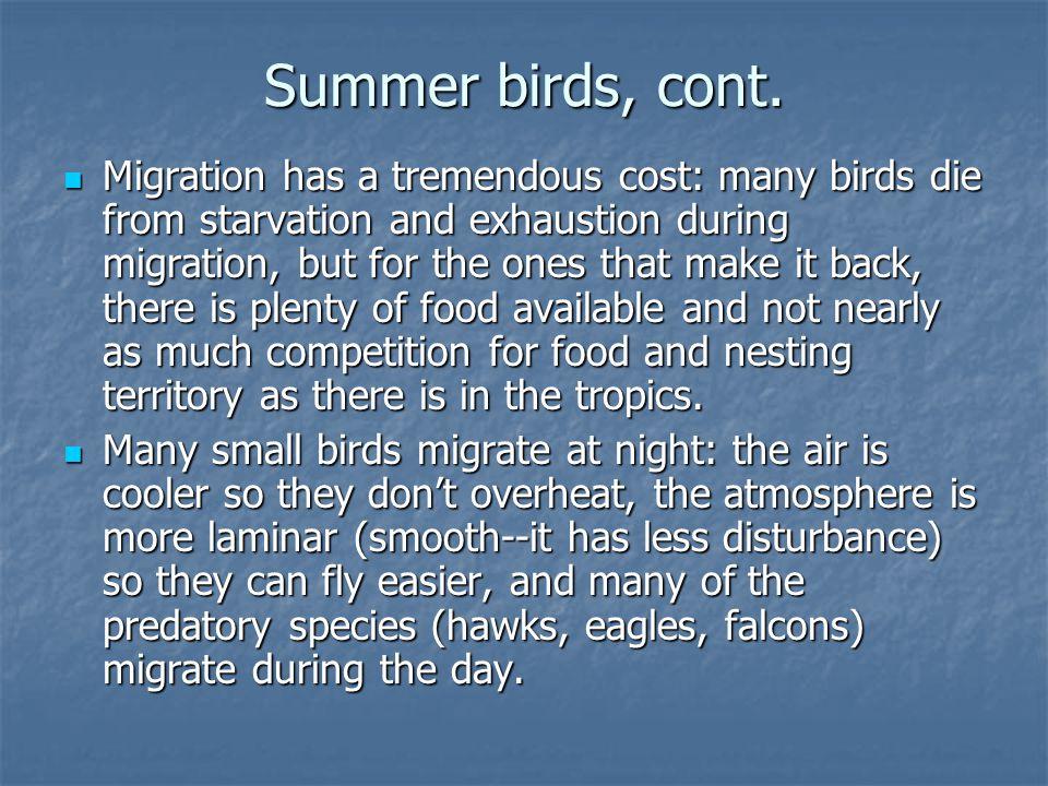 Summer birds, cont.