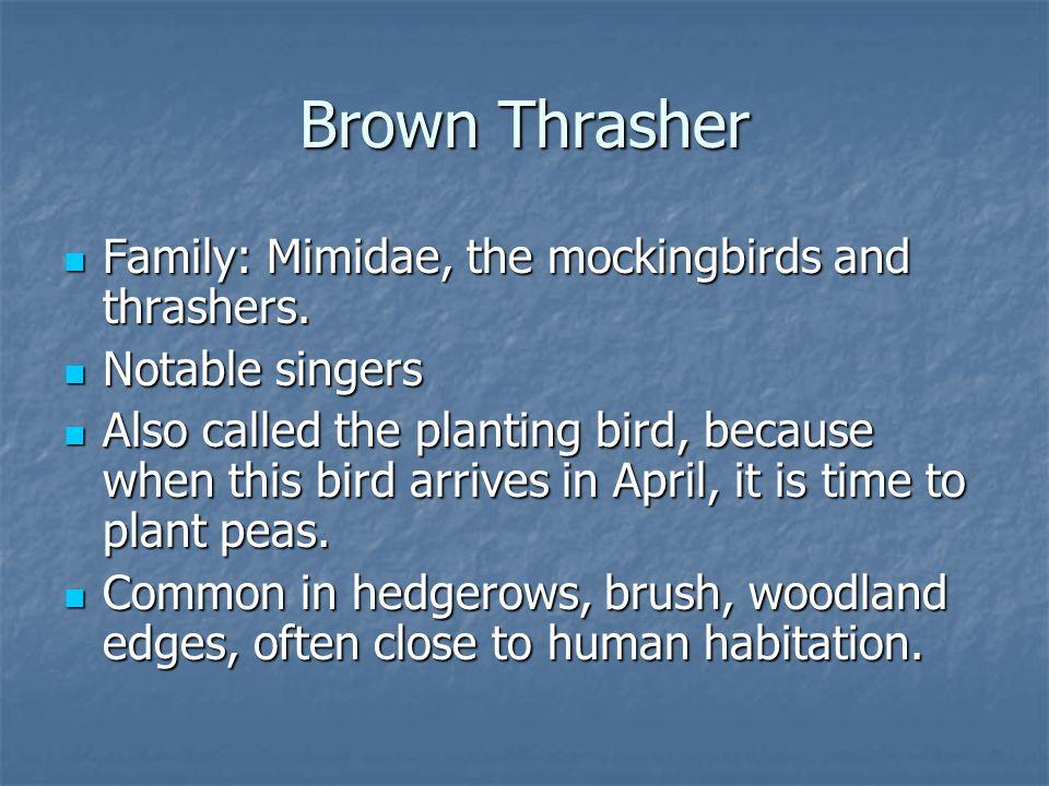Family: Mimidae, the mockingbirds and thrashers. Family: Mimidae, the mockingbirds and thrashers.