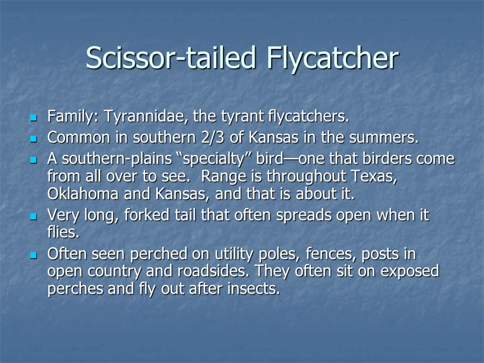 Family: Tyrannidae, the tyrant flycatchers. Family: Tyrannidae, the tyrant flycatchers.