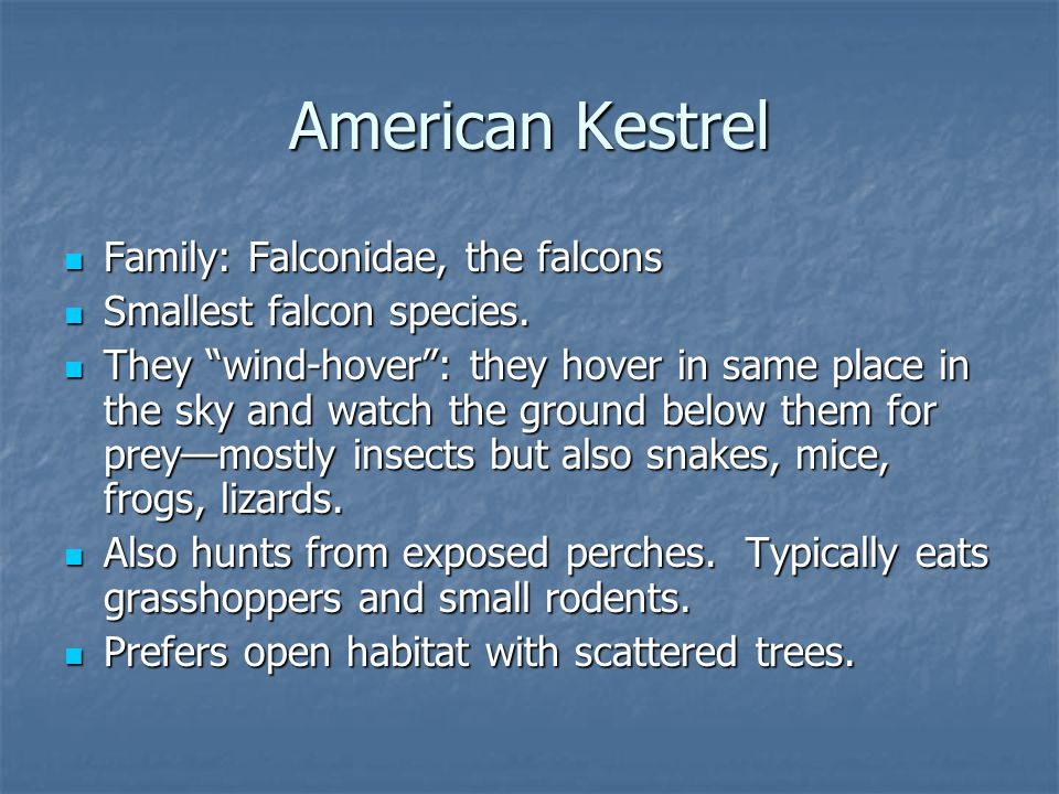 Family: Falconidae, the falcons Family: Falconidae, the falcons Smallest falcon species.