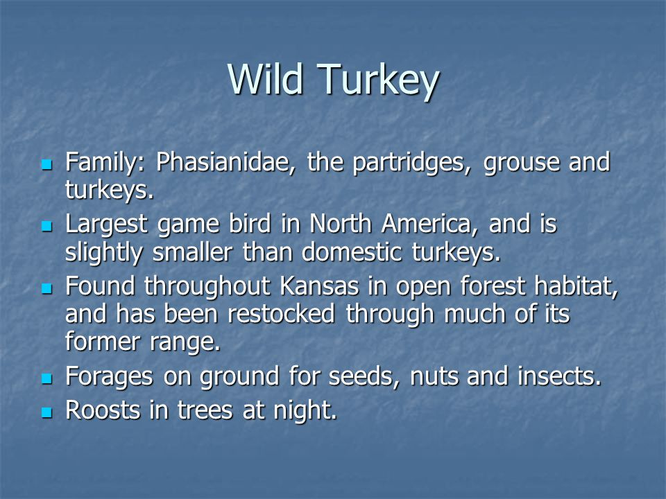 Family: Phasianidae, the partridges, grouse and turkeys.