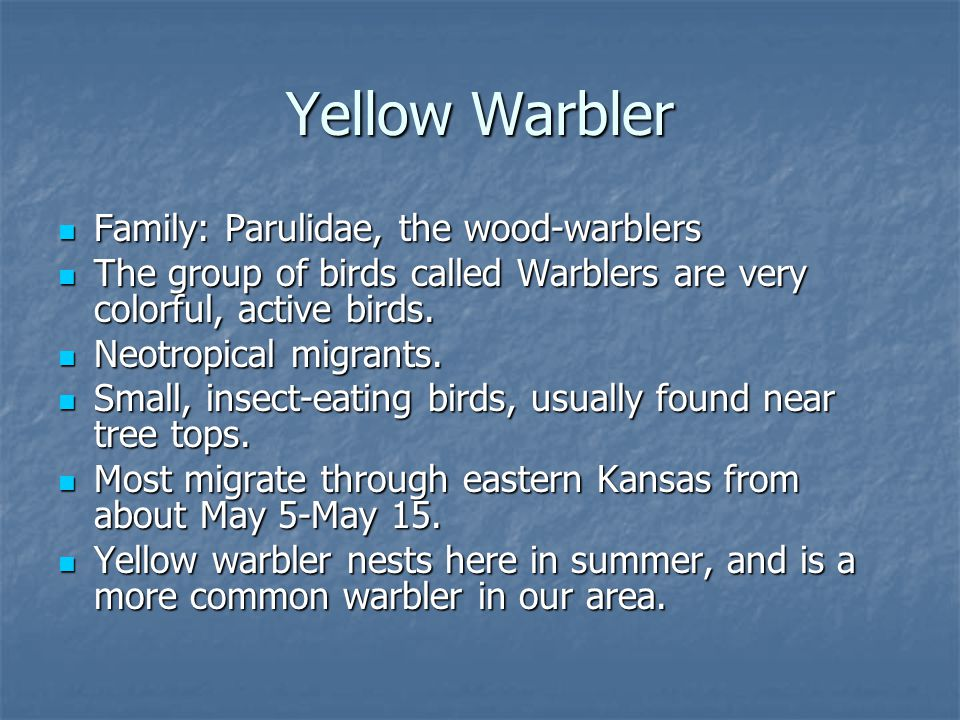 Family: Parulidae, the wood-warblers Family: Parulidae, the wood-warblers The group of birds called Warblers are very colorful, active birds.