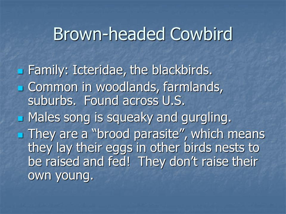 Family: Icteridae, the blackbirds. Family: Icteridae, the blackbirds.