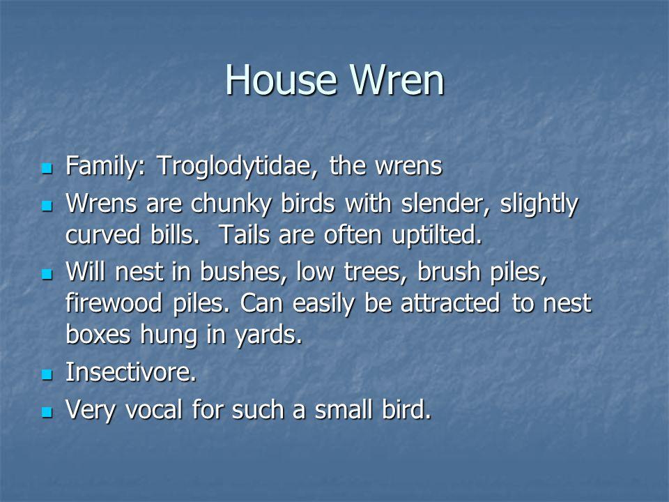 Family: Troglodytidae, the wrens Family: Troglodytidae, the wrens Wrens are chunky birds with slender, slightly curved bills.