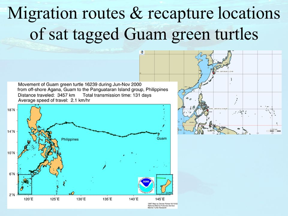 To learn more about sea turtle movements and behavior.