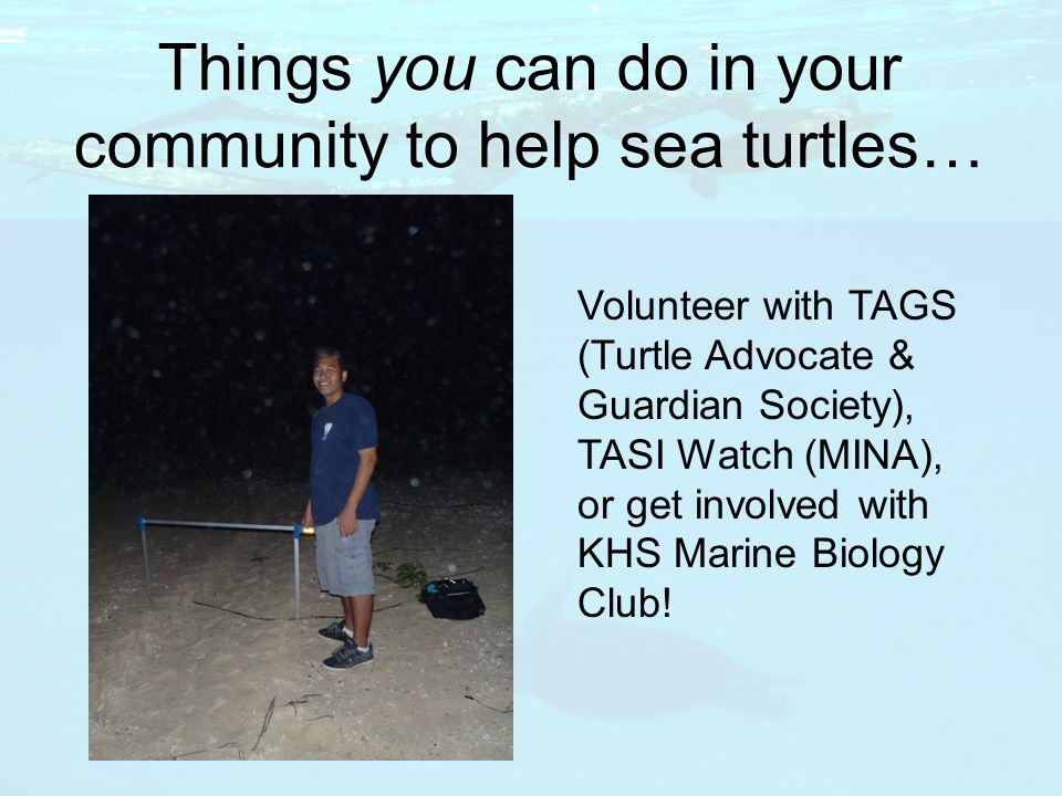 Things you can do in your community to help sea turtles… Volunteer with TAGS (Turtle Advocate & Guardian Society), TASI Watch (MINA), or get involved with KHS Marine Biology Club!