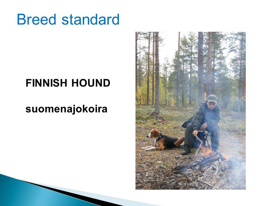 Breed standard FINNISH HOUND suomenajokoira