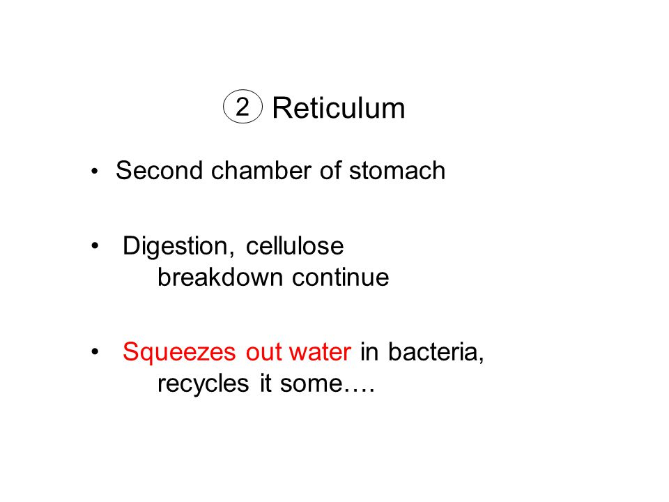 Reticulum Second chamber of stomach Digestion, cellulose breakdown continue Squeezes out water in bacteria, recycles it some….