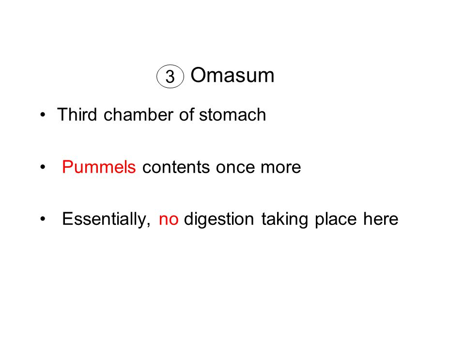 Omasum Third chamber of stomach Pummels contents once more Essentially, no digestion taking place here 3