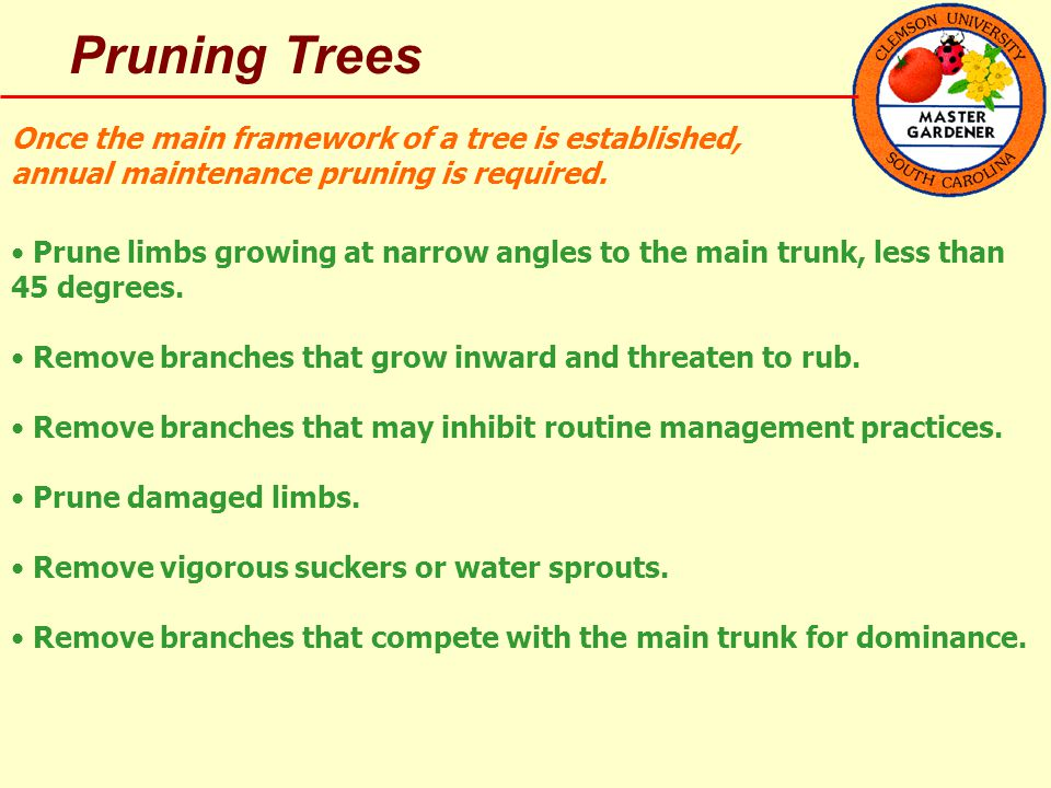 Pruning Trees Once the main framework of a tree is established, annual maintenance pruning is required.