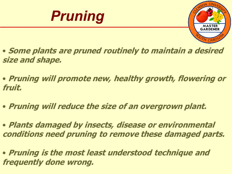 Pruning Some plants are pruned routinely to maintain a desired size and shape.