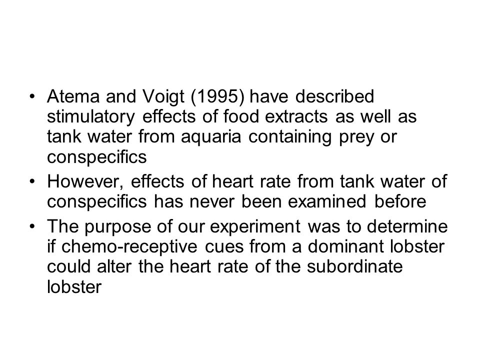 Atema and Voigt (1995) have described stimulatory effects of food extracts as well as tank water from aquaria containing prey or conspecifics However, effects of heart rate from tank water of conspecifics has never been examined before The purpose of our experiment was to determine if chemo-receptive cues from a dominant lobster could alter the heart rate of the subordinate lobster