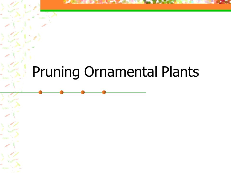 Principles of Pruning Shrubs that produce flowers on wood grown the previous season should be pruned immediately after flowers fall off.