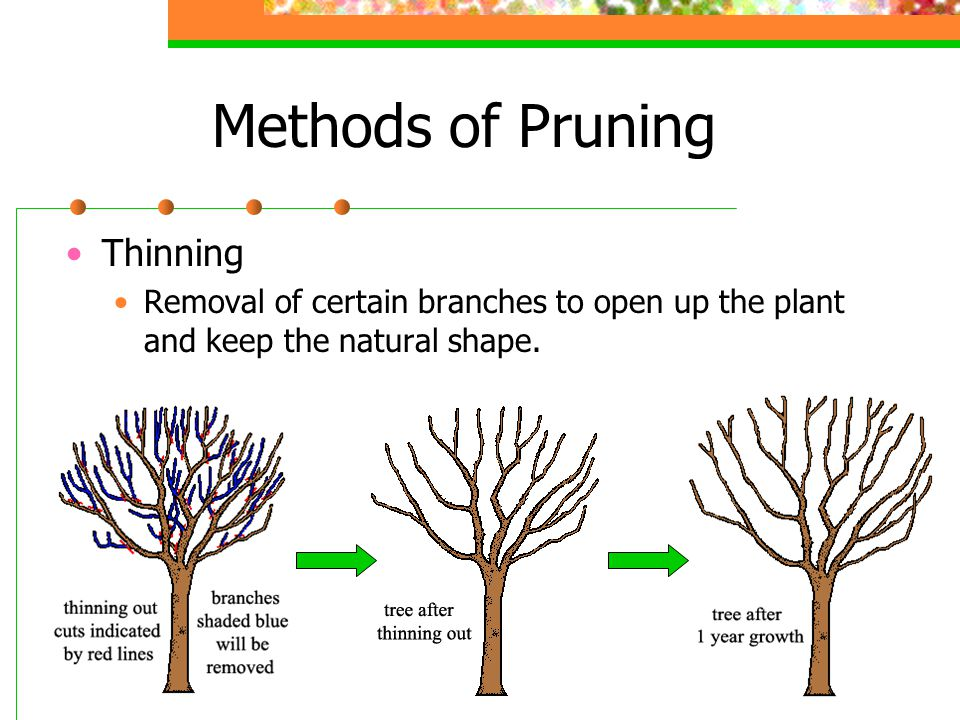 Methods of Pruning Heading Back Removes the end section of branches at the same height so that new shoots make the plant thicker.