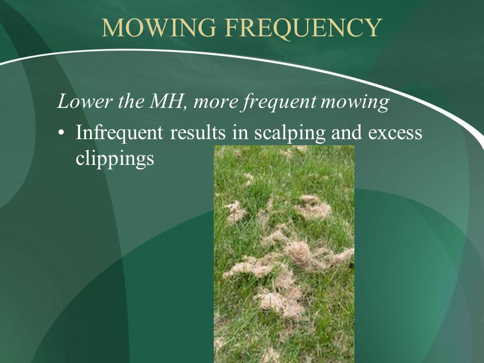 MOWING FREQUENCY Lower the MH, more frequent mowing Infrequent results in scalping and excess clippings