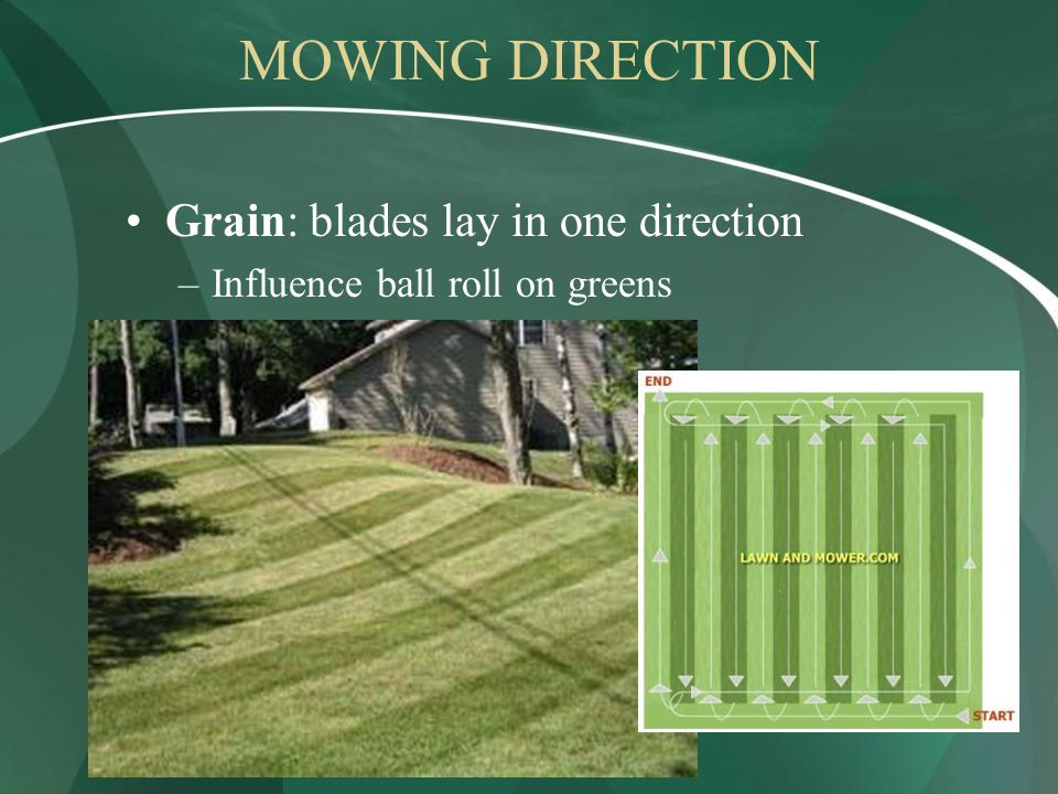 MOWING DIRECTION Grain: blades lay in one direction –Influence ball roll on greens