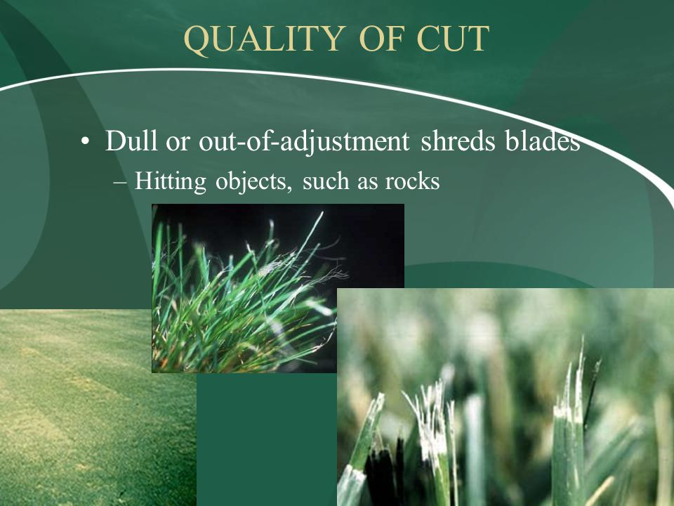 Dull or out-of-adjustment shreds blades –Hitting objects, such as rocks QUALITY OF CUT