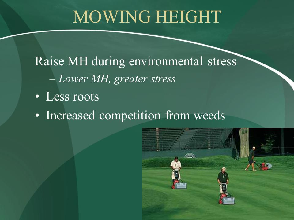 MOWING HEIGHT Raise MH during environmental stress –Lower MH, greater stress Less roots Increased competition from weeds