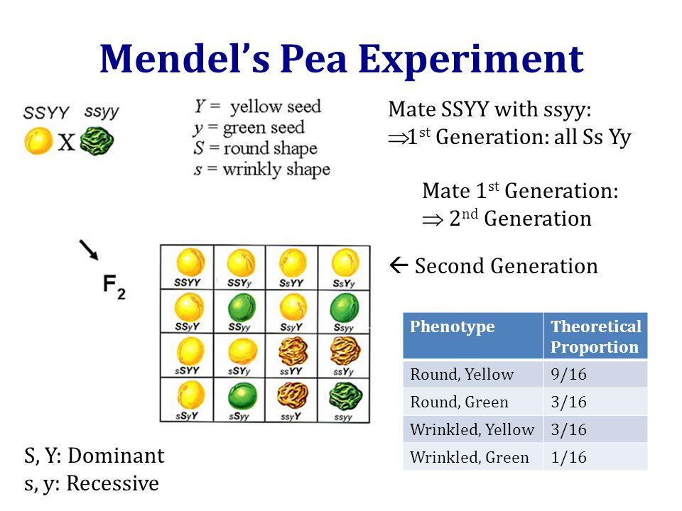 Mendel's Pea Experiment Source: Mendel, Gregor. (1866).