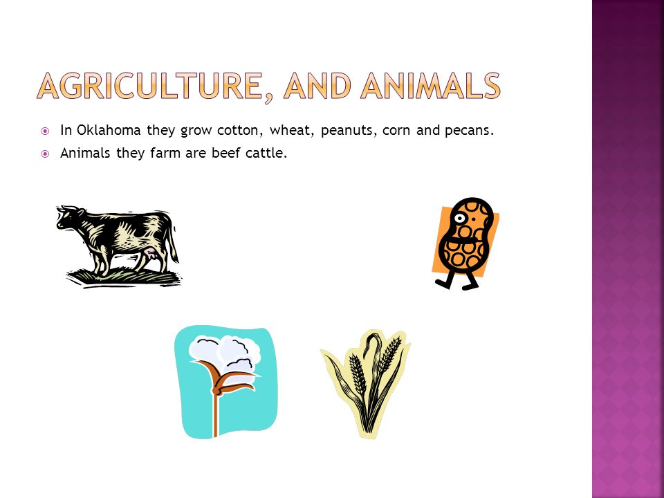  In Oklahoma they grow cotton, wheat, peanuts, corn and pecans.  Animals they farm are beef cattle.