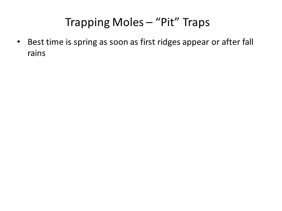 "Trapping Moles – ""Pit"" Traps Best time is spring as soon as first ridges appear or after fall rains"