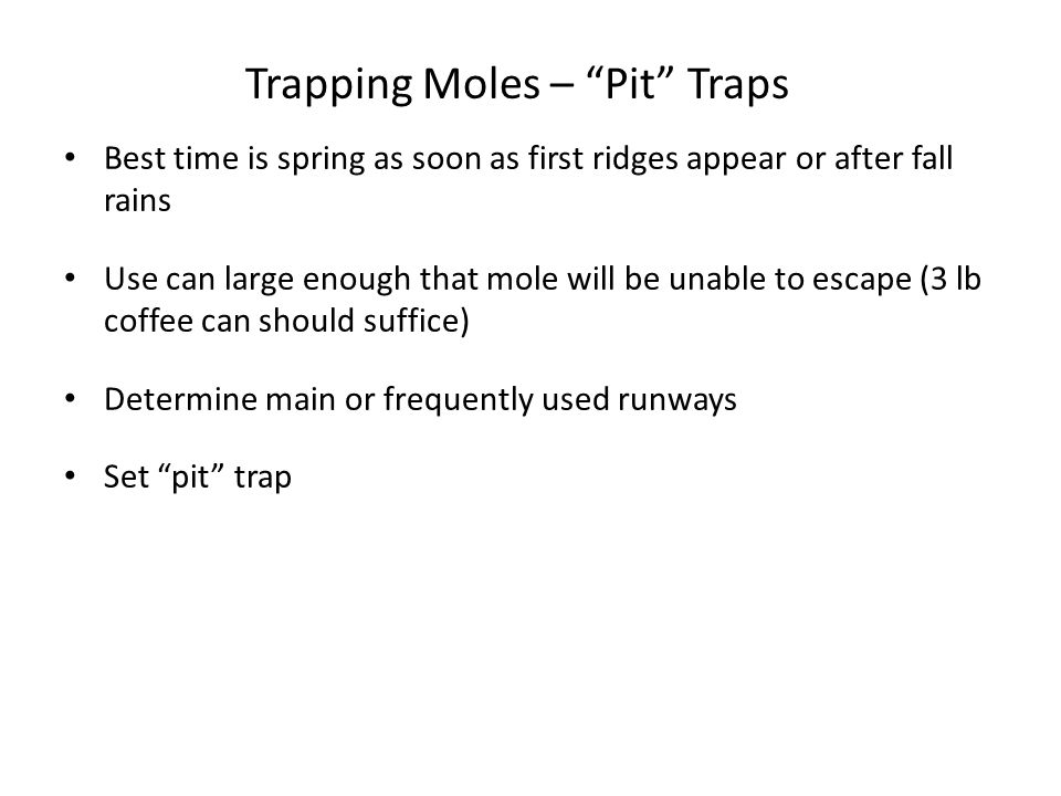 "Trapping Moles – ""Pit"" Traps Best time is spring as soon as first ridges appear or after fall rains Use can large enough that mole will be unable to e"