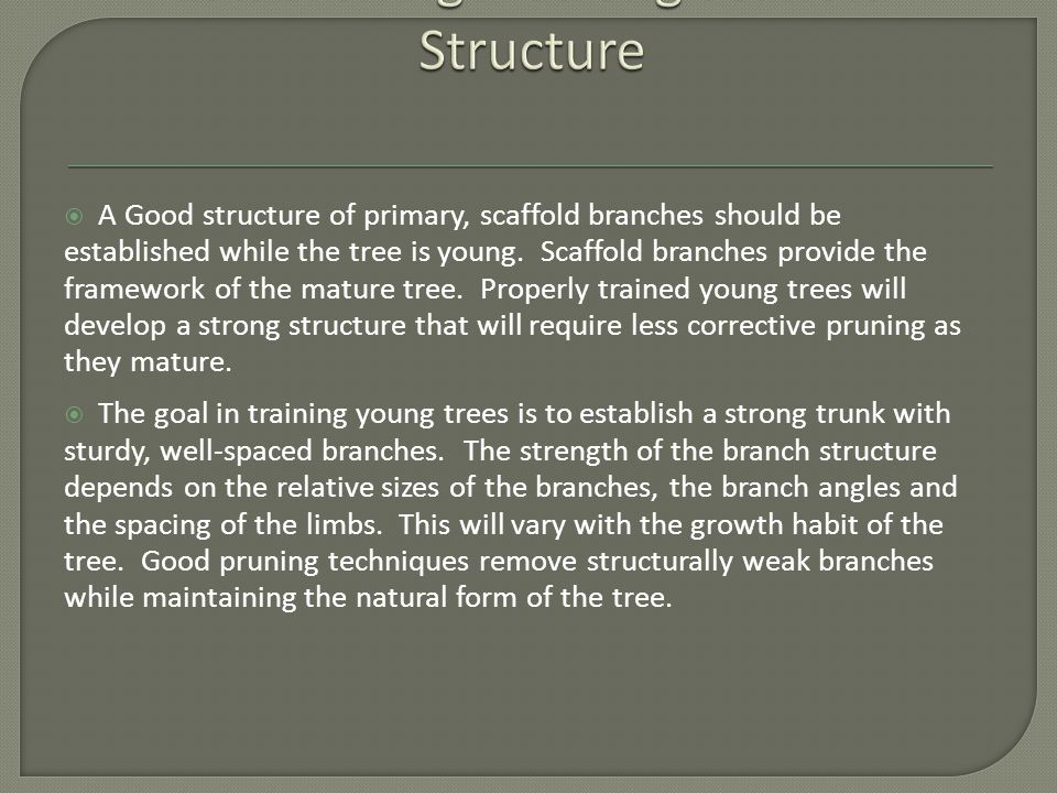  A Good structure of primary, scaffold branches should be established while the tree is young.