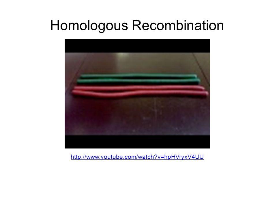 http://www.youtube.com/watch?v=hpHVryxV4UU Homologous Recombination