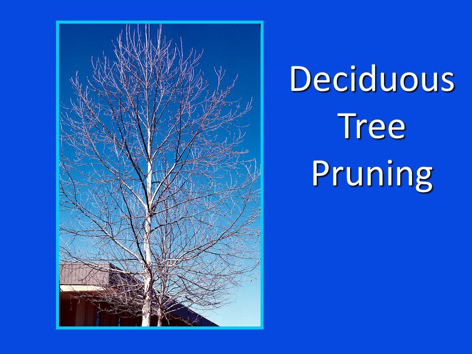 DeciduousTreePruning