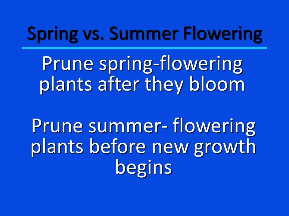 Spring vs.