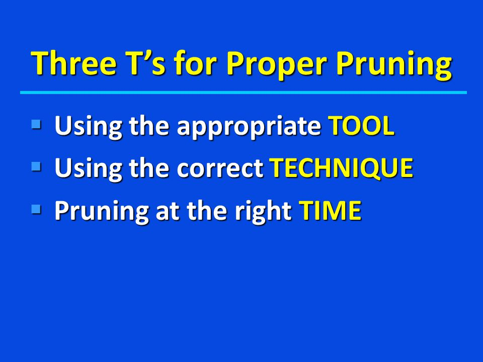 Three T's for Proper Pruning  Using the appropriate TOOL  Using the correct TECHNIQUE  Pruning at the right TIME