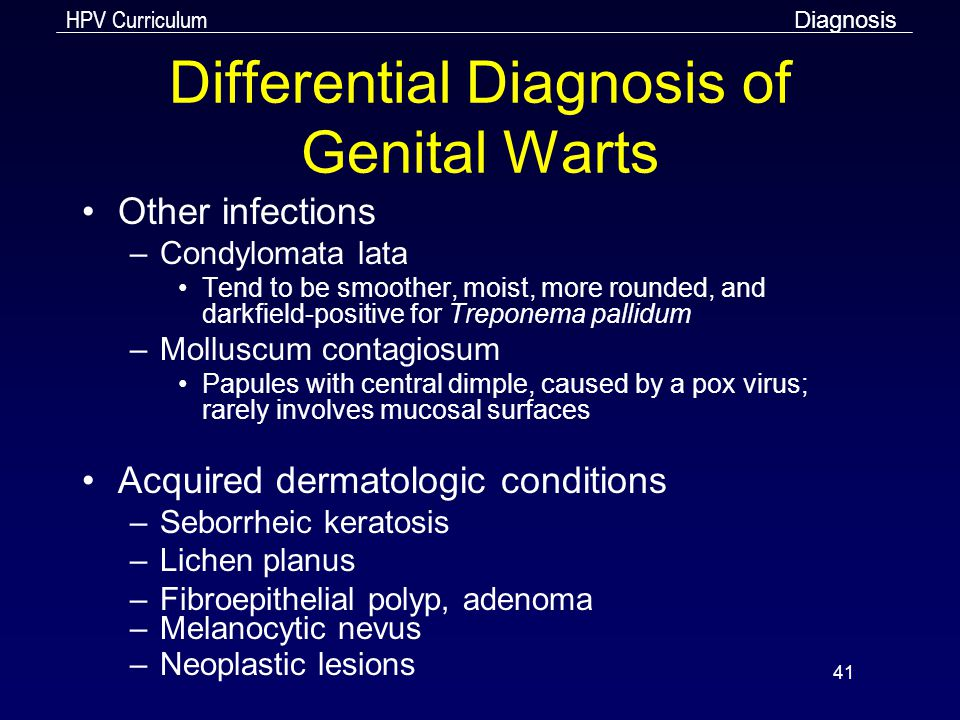HPV Curriculum 41 Differential Diagnosis of Genital Warts Other infections –Condylomata lata Tend to be smoother, moist, more rounded, and darkfield-p