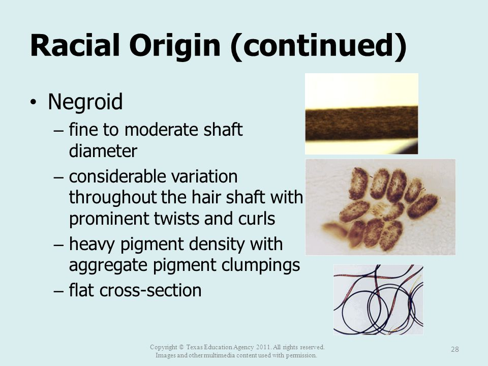 Racial Origin (continued) Negroid – fine to moderate shaft diameter – considerable variation throughout the hair shaft with prominent twists and curls – heavy pigment density with aggregate pigment clumpings – flat cross-section 28 Copyright © Texas Education Agency 2011.