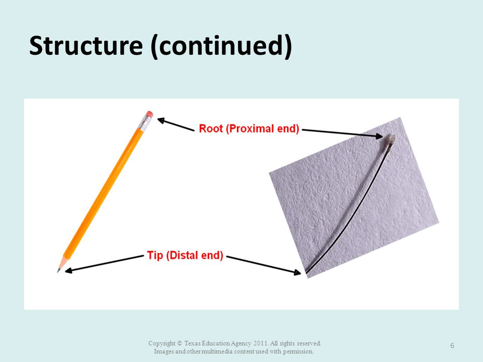 Structure (continued) 6 Copyright © Texas Education Agency 2011.