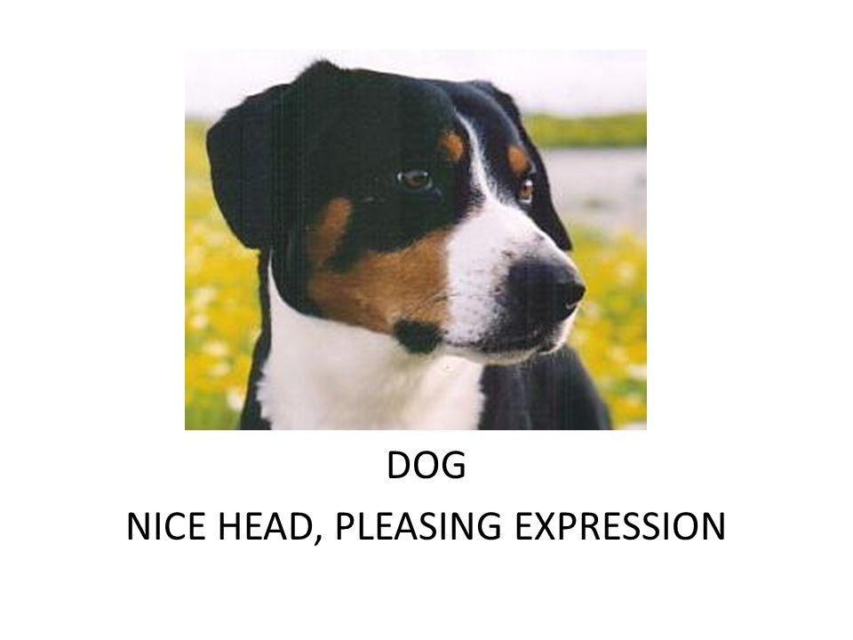 DOG DARK EYE, PLEASING HEAD & FRONT