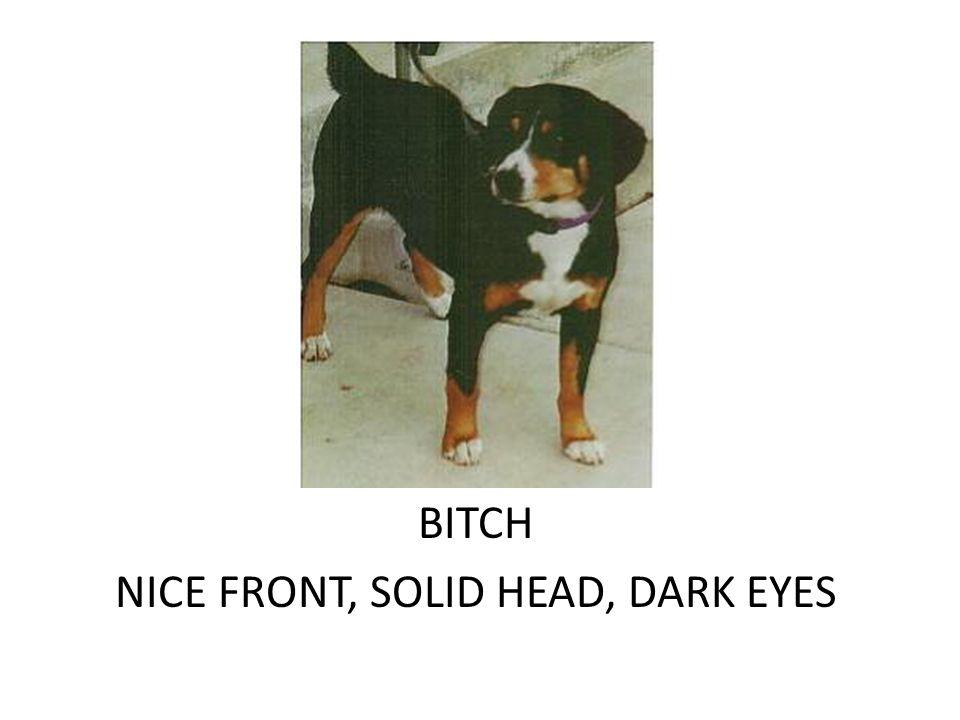 DOG NICE HEAD, PLEASING EXPRESSION