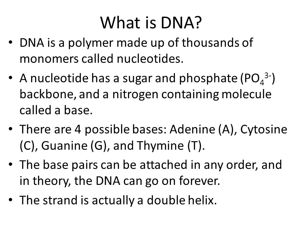 What is DNA. DNA is a polymer made up of thousands of monomers called nucleotides.