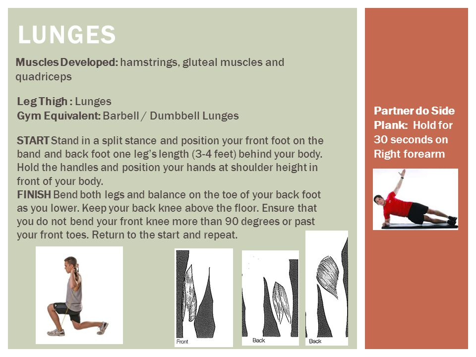 Muscles Developed: hamstrings, gluteal muscles and quadriceps LUNGES Leg Thigh : Lunges Gym Equivalent: Barbell / Dumbbell Lunges START Stand in a spl