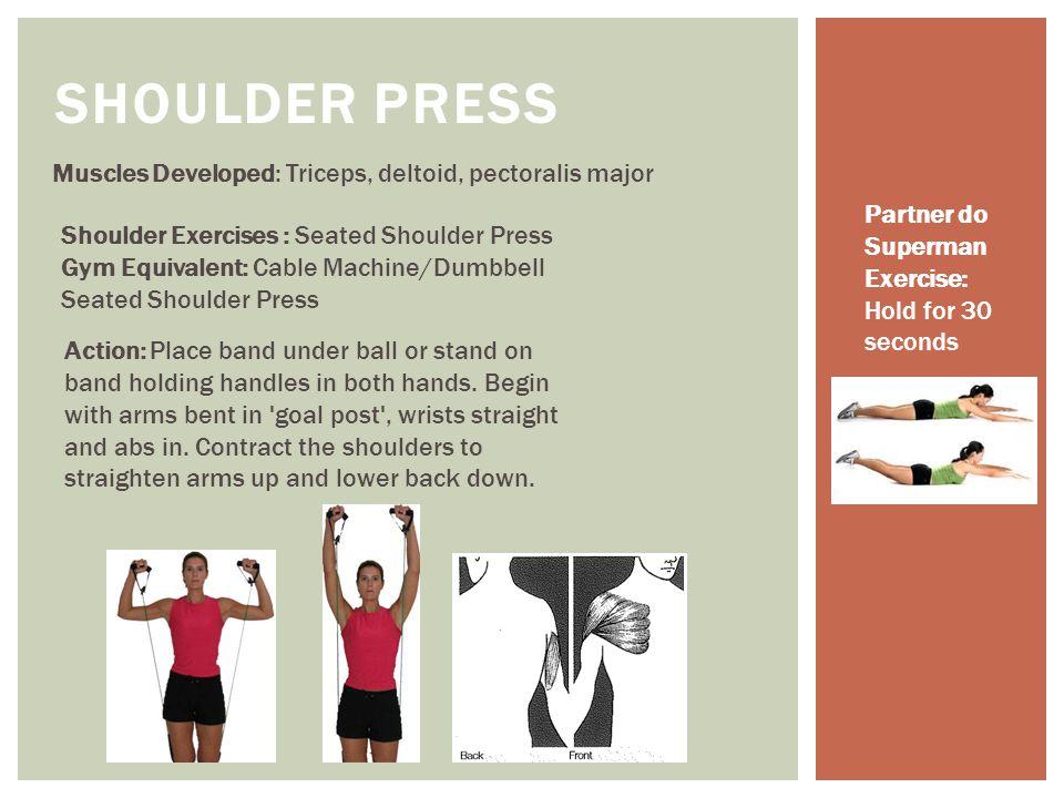 Muscles Developed: Triceps, deltoid, pectoralis major SHOULDER PRESS Shoulder Exercises : Seated Shoulder Press Gym Equivalent: Cable Machine/Dumbbell