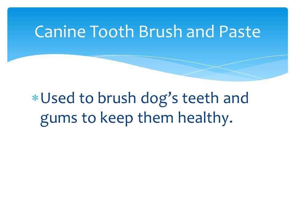  Used to brush dog's teeth and gums to keep them healthy. Canine Tooth Brush and Paste