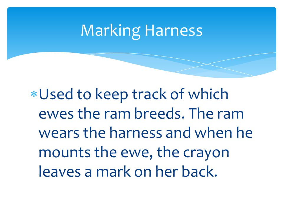  Used to keep track of which ewes the ram breeds. The ram wears the harness and when he mounts the ewe, the crayon leaves a mark on her back. Marking