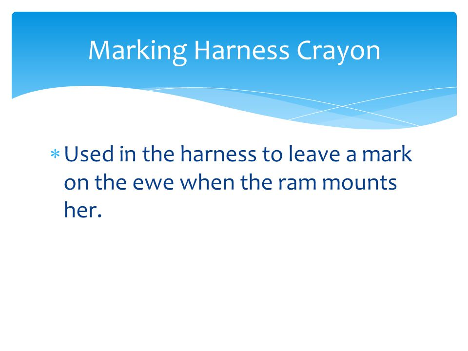  Used in the harness to leave a mark on the ewe when the ram mounts her. Marking Harness Crayon
