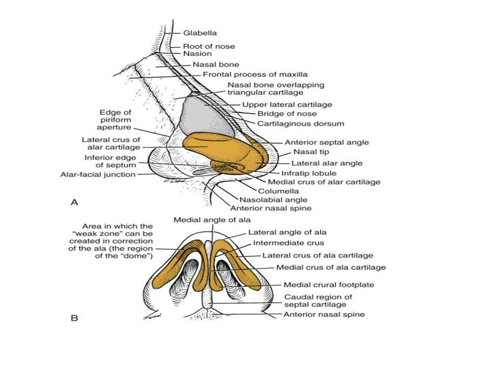 Skin ที่หนามาก, มี sebaceous glands, subcutaneous tissue เยอะ, เป็น least ideal skin type