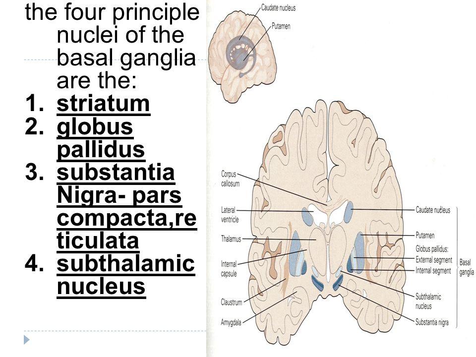 the four principle nuclei of the basal ganglia are the: 1.striatum 2.globus pallidus 3.substantia Nigra- pars compacta,re ticulata 4.subthalamic nucleus