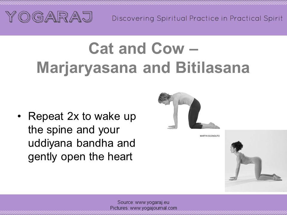 Cat and Cow – Marjaryasana and Bitilasana Repeat 2x to wake up the spine and your uddiyana bandha and gently open the heart Source: www.yogaraj.eu Pictures: www.yogajournal.com